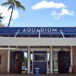 Waikiki Aquarium Now Open